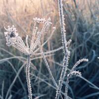 Cold morning V by Juliana-Mierzejewska