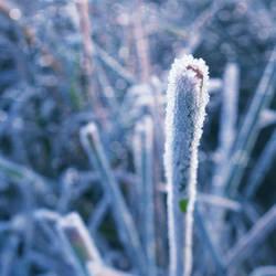 Cold morning XI