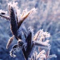Cold morning XVII by Juliana-Mierzejewska
