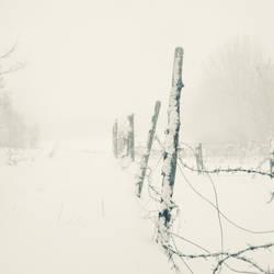 Winter XI by Juliana-Mierzejewska