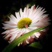 Spring III by Juliana-Mierzejewska