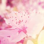 Spring VIII