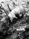 Snail III