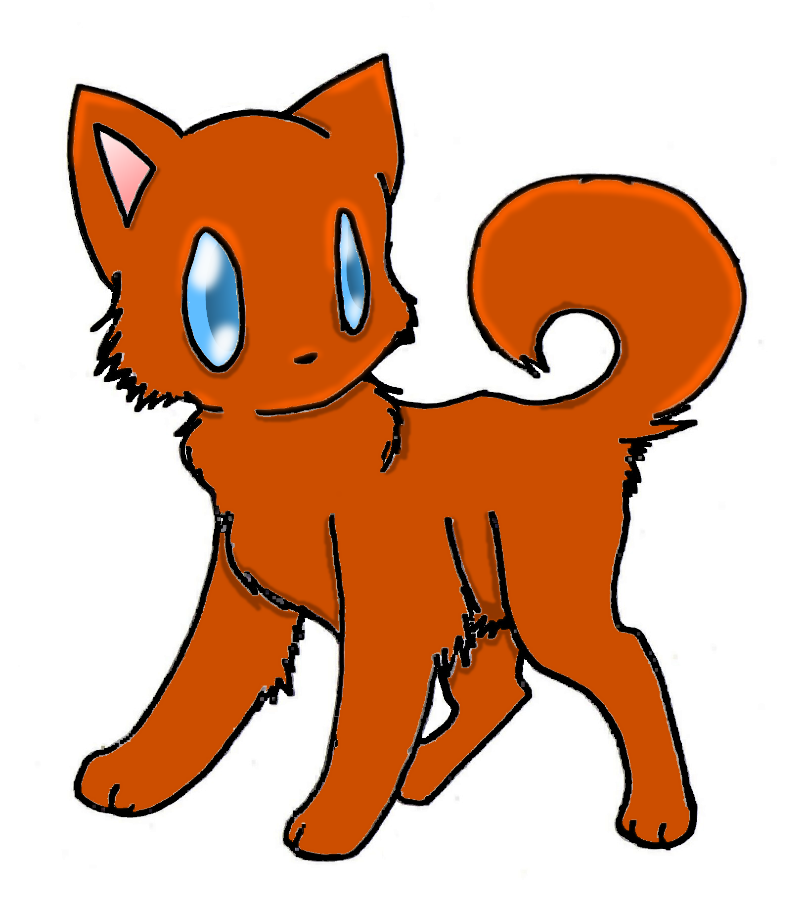 campylobacter in cats