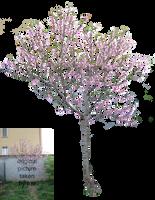 Blooming tree by Olgola