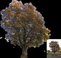 Autumn tree by Olgola