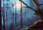 PREMADE - Night Forest