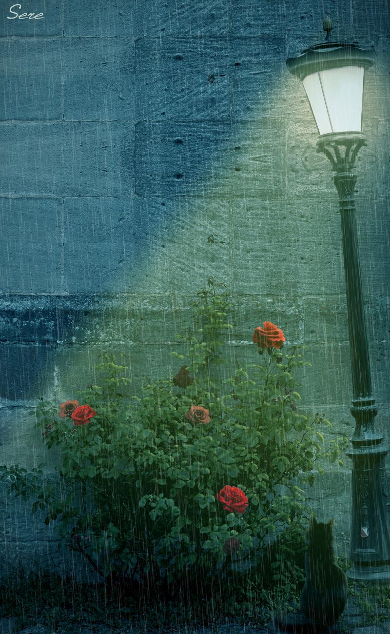 Rainy summer night