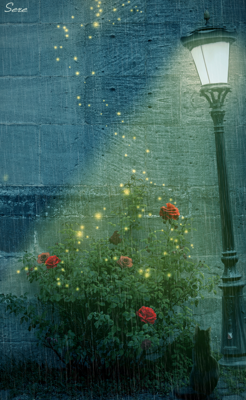 Rainy summer night