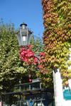 Autumn ivy 02 by Olgola