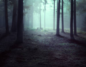 PREMADE - Misty forest