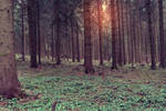 Premade - Forest