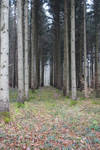 Path in the forest 01 by Olgola