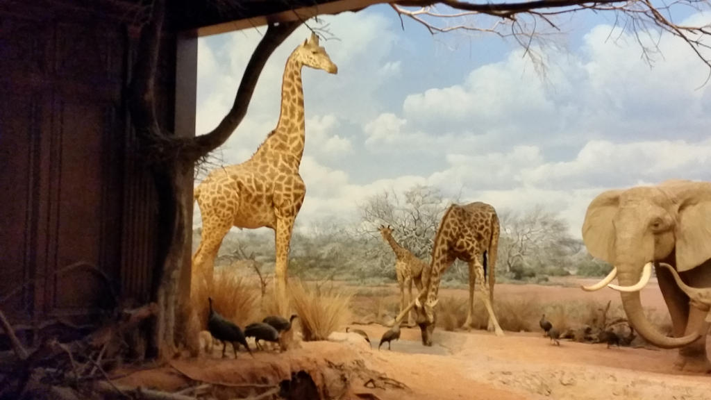 Giraffe Diorama by Princessmelissa19 on DeviantArt