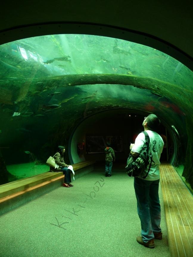 Steinhart Aquarium Green By Kiki Bozu On Deviantart