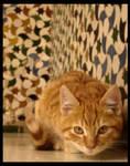 .Alhambra Cats.