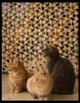 .Alhambra Cats II.