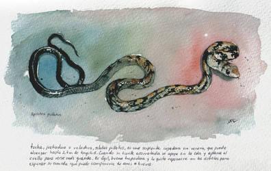 Spilotes pullatus by romero-leo
