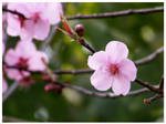Blossoms III by WeltKatastrophe