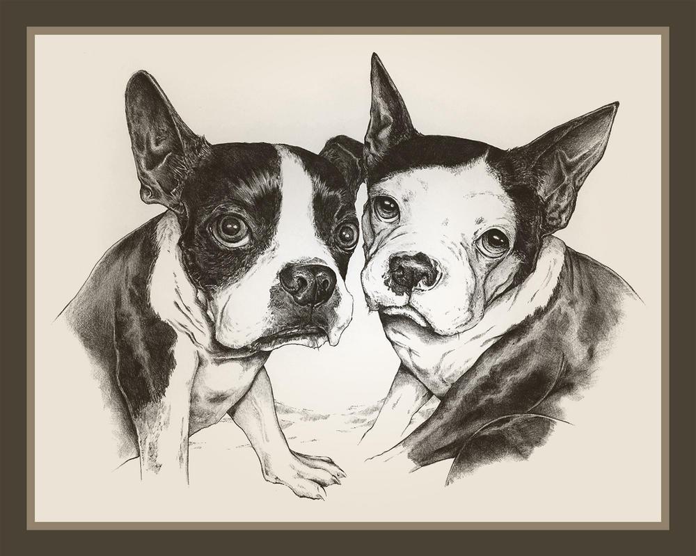 Boston Terriers by TsaoShin