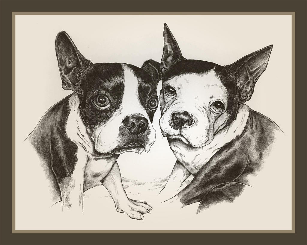 Boston Terriers by TsaoShin