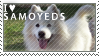 Stamp samoyed by EtskuniArt