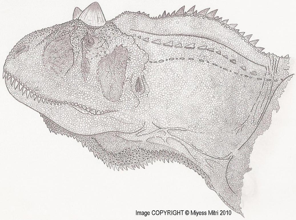carnotaurus sastrei bust by miyess on deviantart
