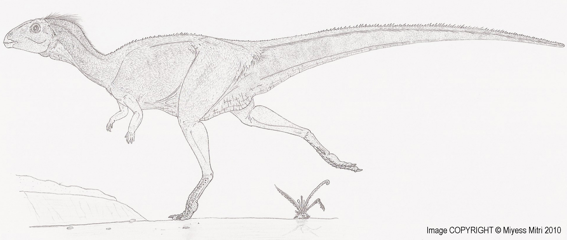 Qantassaurus intrepidus by Miyess