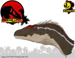 InGen Files - Jurassic Park III Male Raptor by Miyess