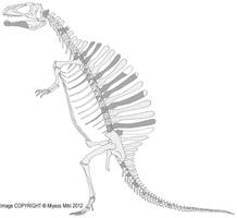 Spinosaurus Old Pose