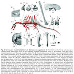 New spinosaurus (excerpt from the paper).