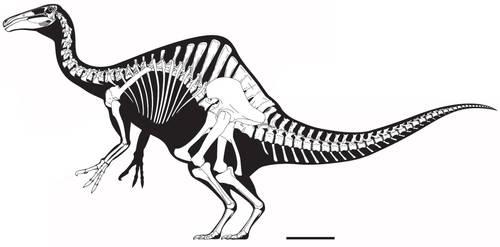 Deinocheirus mirificus Skeletal