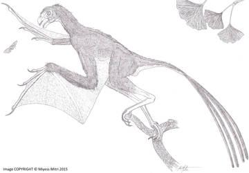 Yi qi, a real Jurassic Chinese dargon by Miyess