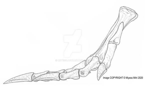 Spinosaurus Foot