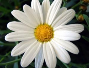 Brebre-le-72391's Profile Picture
