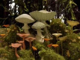 mushroom scene