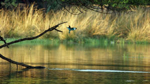 Kingfisher by gotosumeet