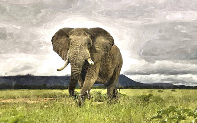 African Elephant by Vilibald Martic