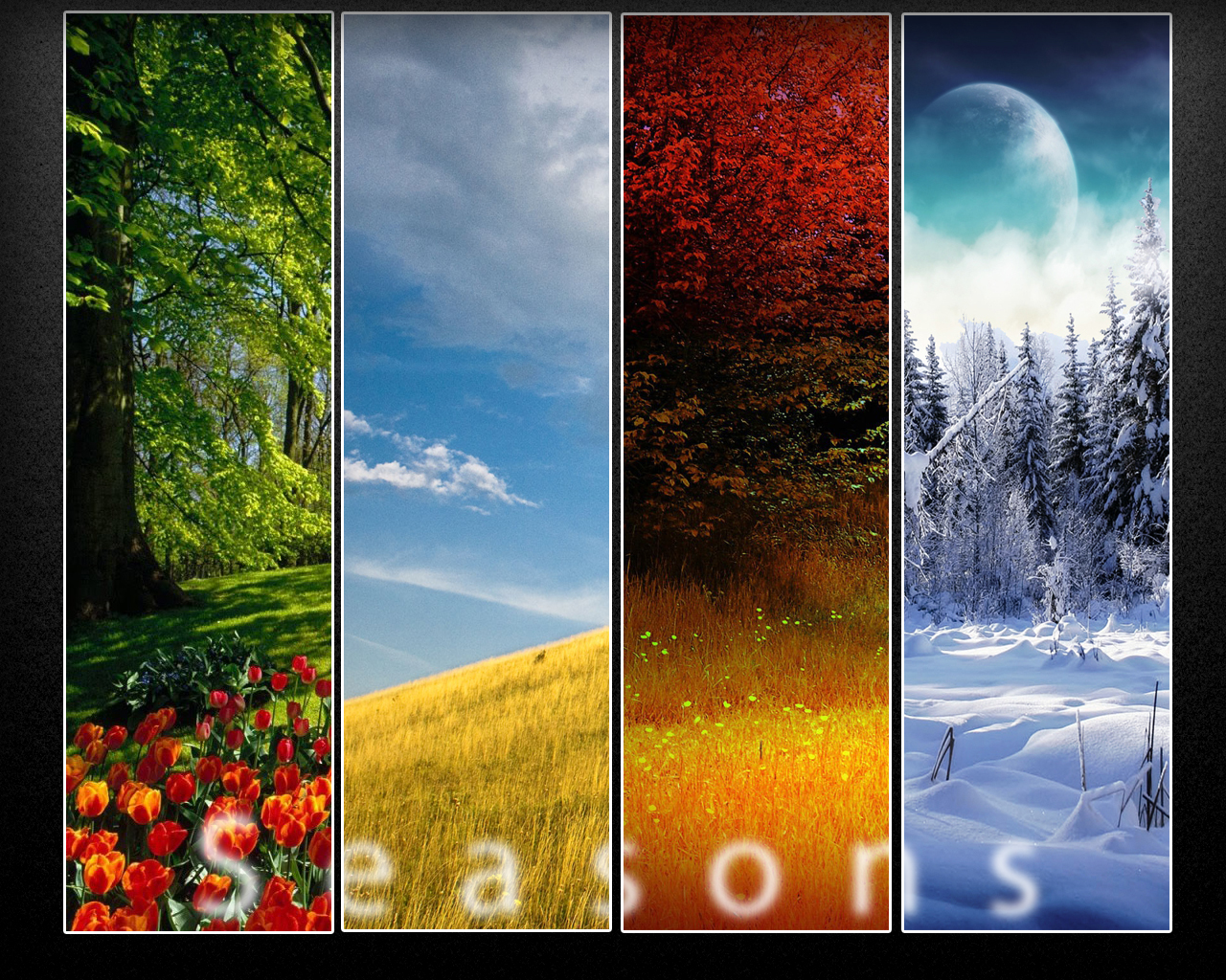 Seasons Wallpaper by ~dranton17 on deviantART