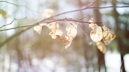 Surviving leaves at spring by beyondimpression