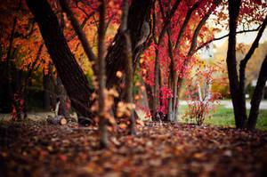 Autumn Forest by beyondimpression