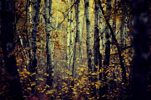 My Dark Forest Room