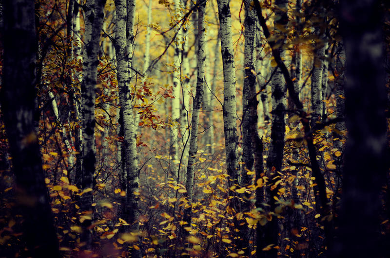 My Dark Forest Room by beyondimpression