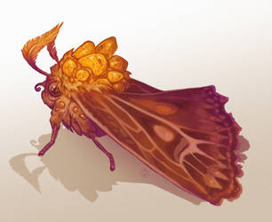 Amber Moth by LiberLibelula