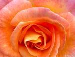Orange Swirl by brittanyfay
