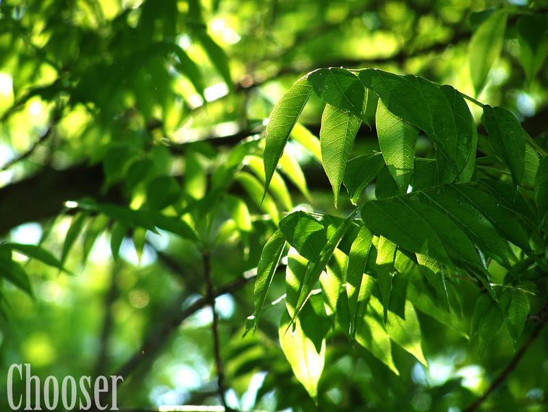 Fresh Air by SerenaVampire734