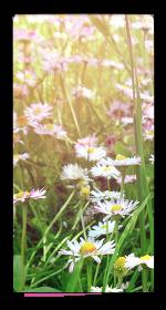 Flowers (F2U) by Artistic-Creature12