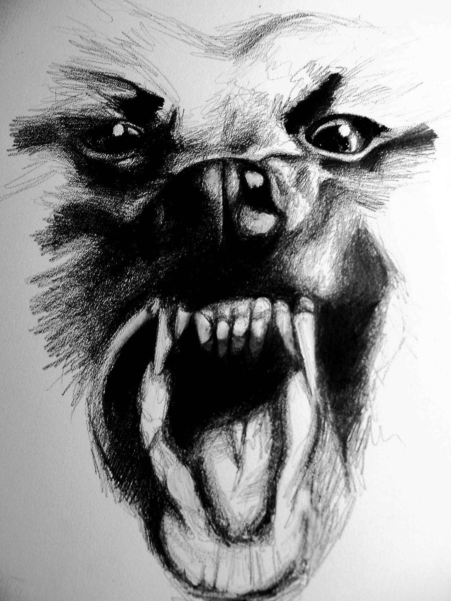 angry animal drawing - photo #31