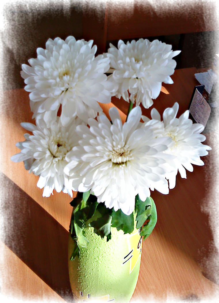 White Chrysanthemum by DanaAnderson