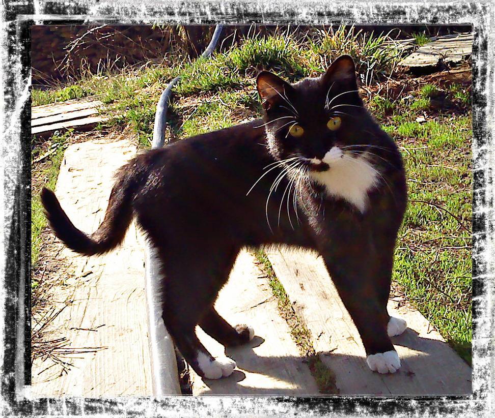 Astonished Kitty by DanaAnderson